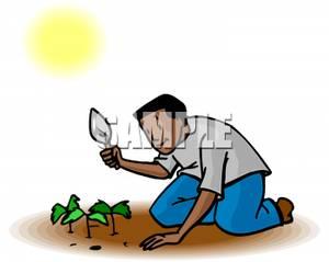 A Young African American Boy Gardening.