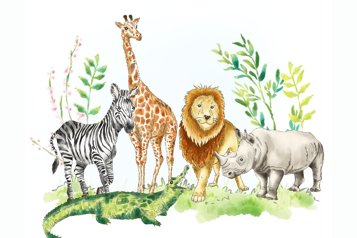 Safari Jungle African animal clipart ~ Illustrations.