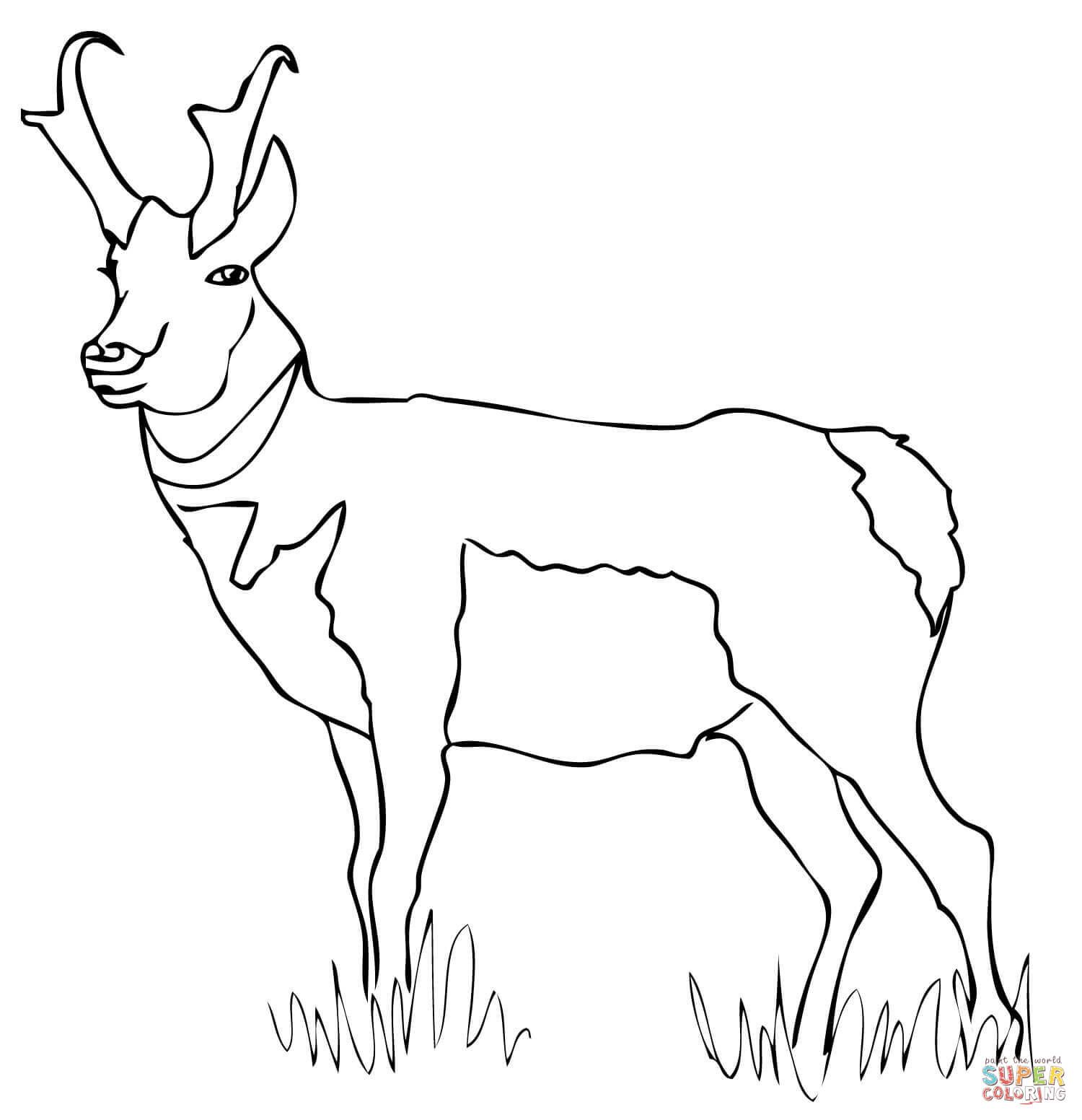 Image result for Pronghorn antelope clipart black and white.