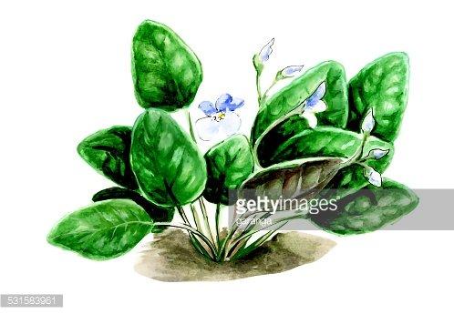 Botany premium clipart.