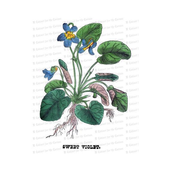 Victorian Floral Vector Clip Art.