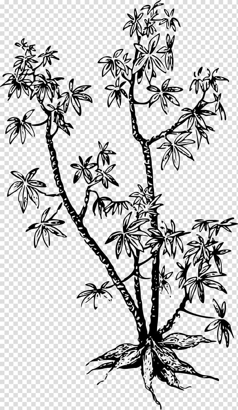 Cassava PNG clipart images free download.