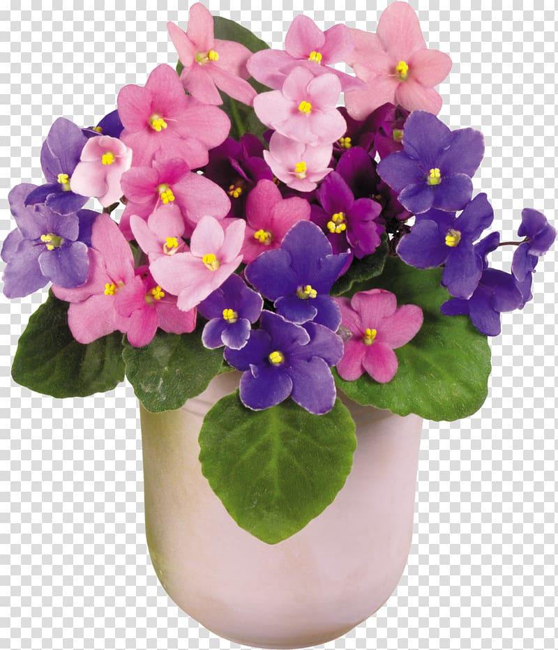 Viola tricolor African violets Houseplant Vase Flower.