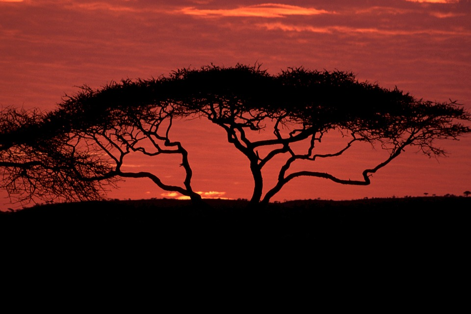 African Sunset image background ~ Cats For Africa.
