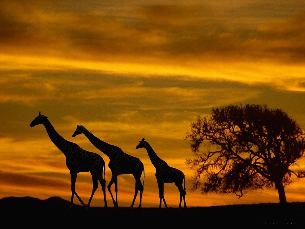 Africa Sunset Clipart.