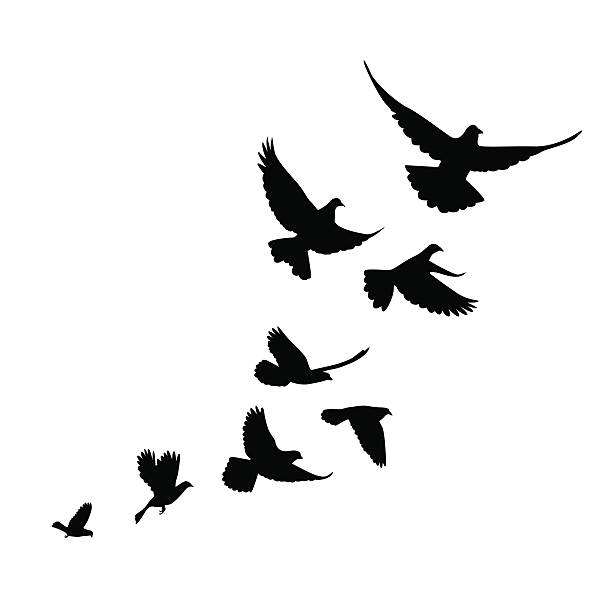Group Of Birds Flying Clipart.