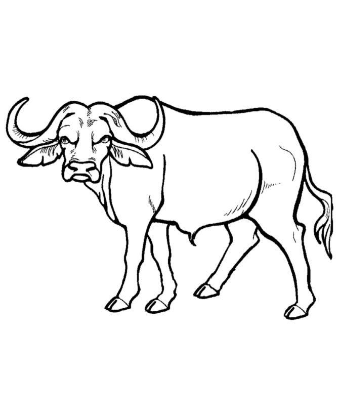 1000+ ideas about African Buffalo on Pinterest.
