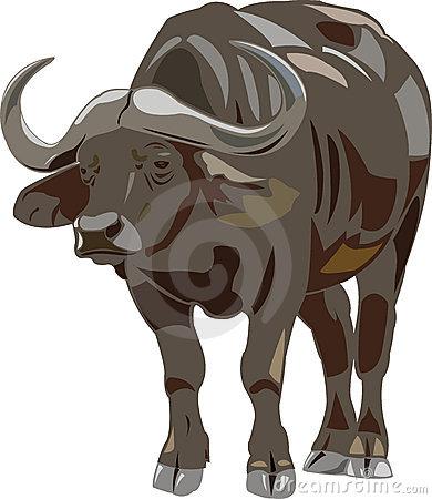 African Buffalo Stock Illustrations.