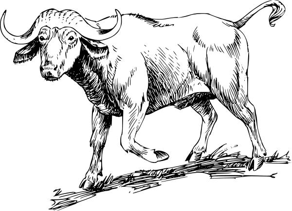 Cape buffalo clipart.