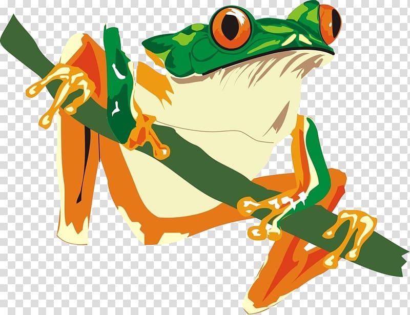 African bullfrog Reptile Amphibian Lizard, frog transparent.