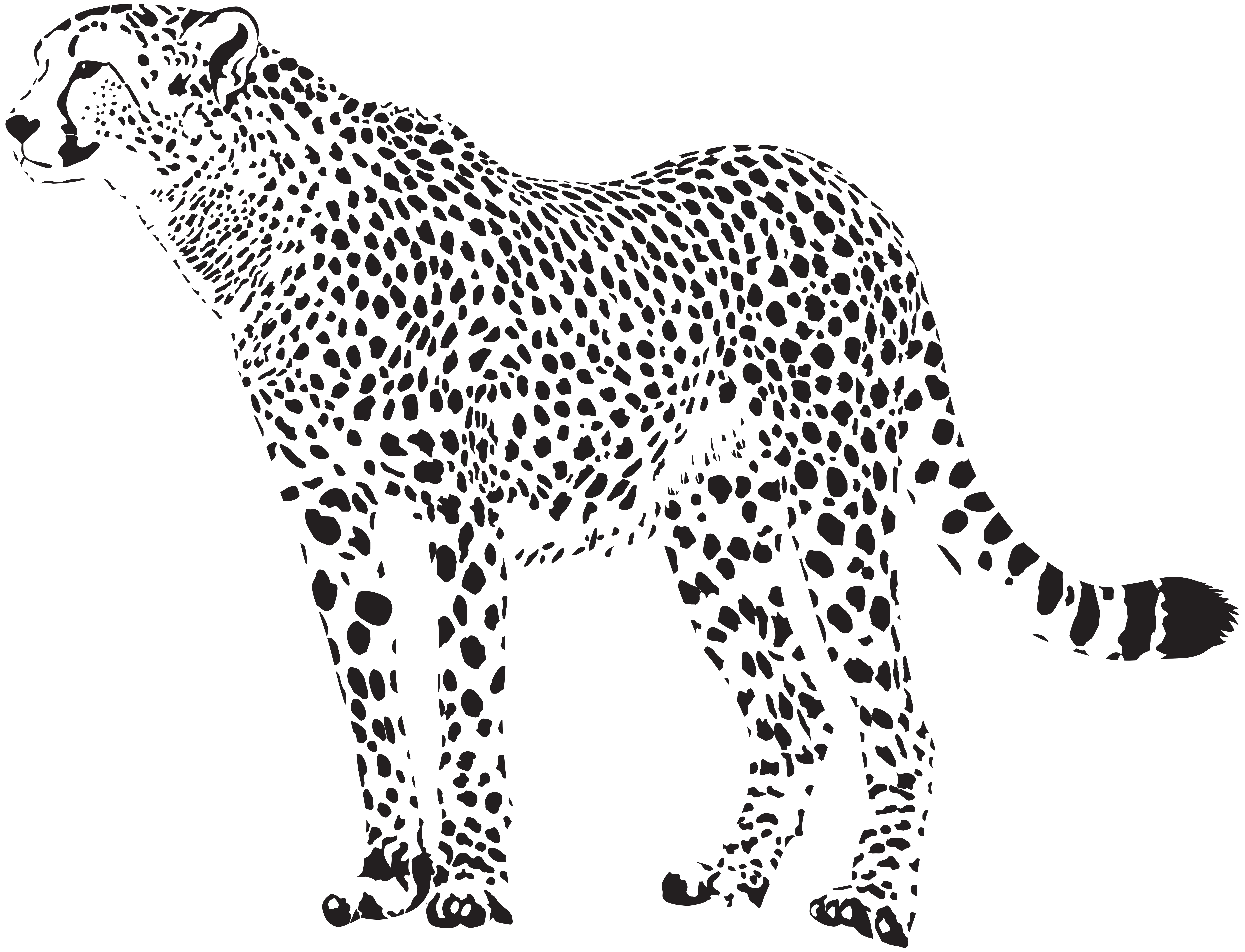 Cheetah Leopard Clip art.