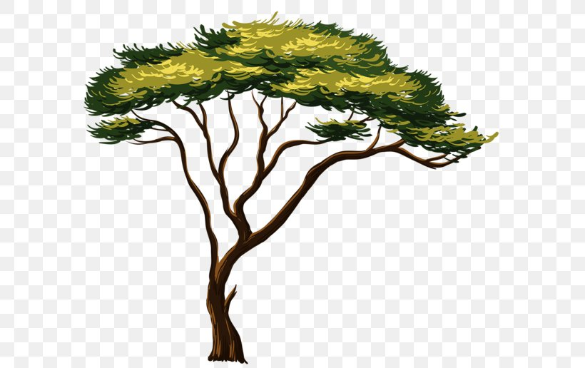 African Trees Clip Art, PNG, 600x516px, African Trees, Art.