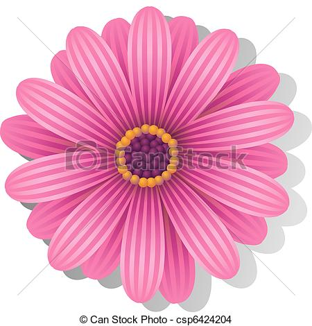 EPS Vector of Beautiful pink Gerber Daisy over white. EPS 8, AI.