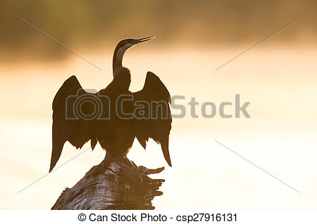 Stock Photos of African darter sitting on tree stump in pond at.