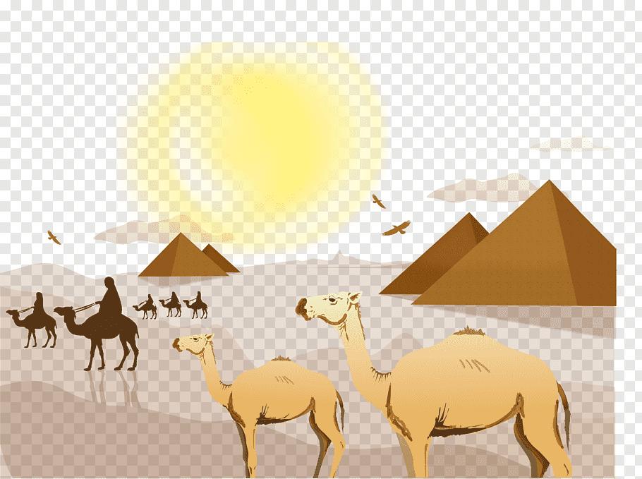 Camels near pyramids, Sahara Desert Landscape Euclidean.