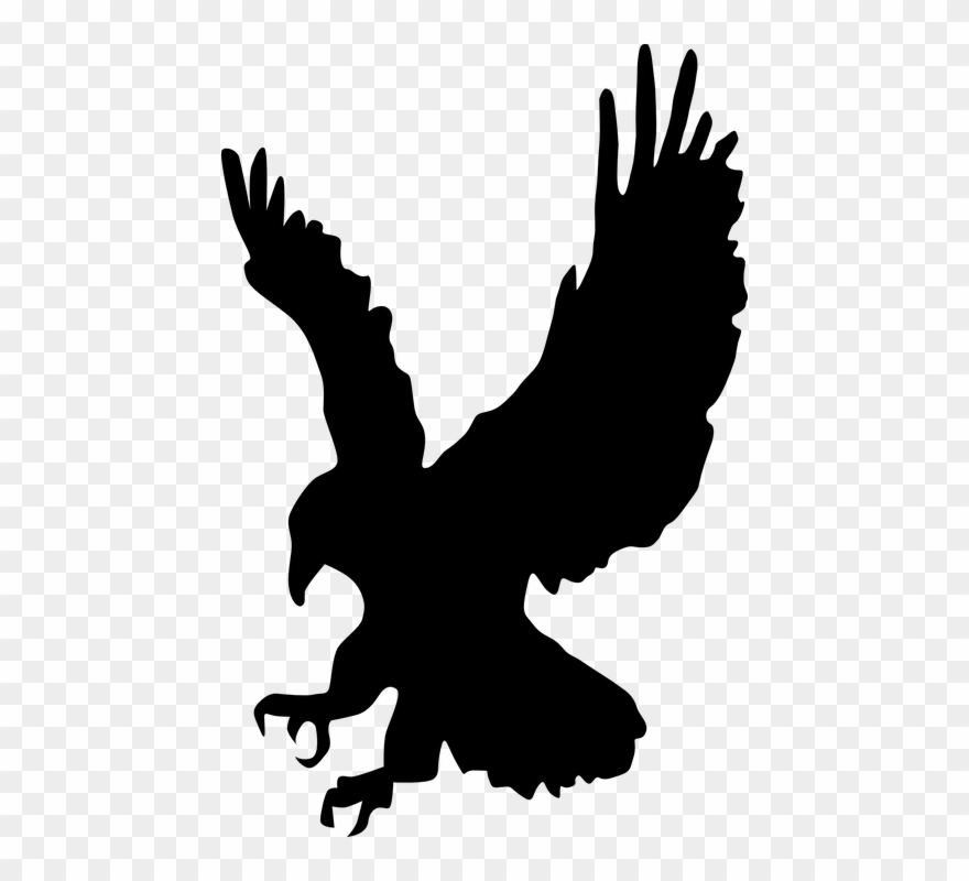 Eagles clipart hawk, Eagles hawk Transparent FREE for.