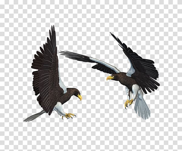 Bald Eagle African fish eagle, One pair of eagle wings.