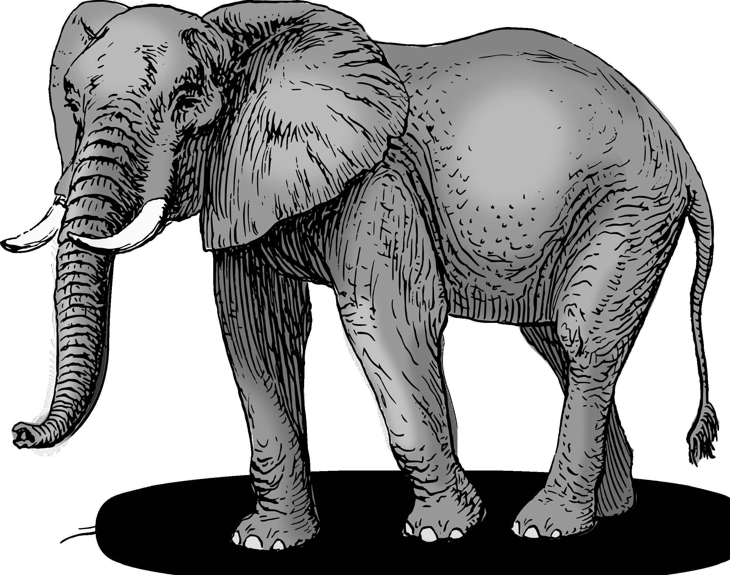 African elephant clipart danaamda top.