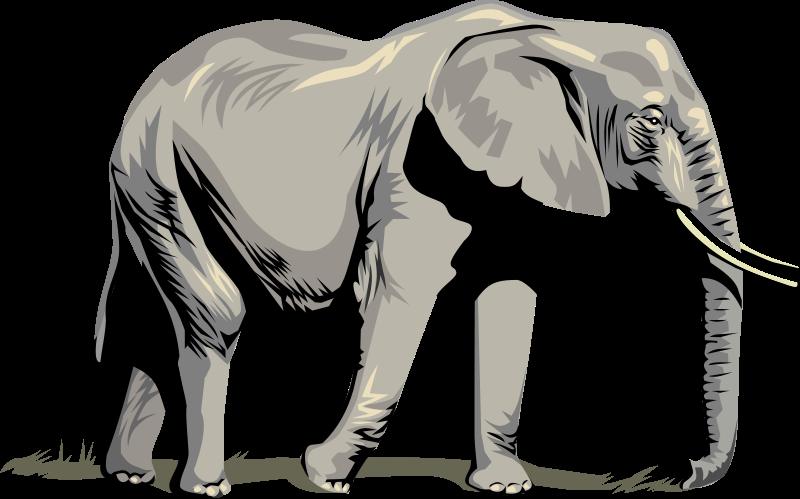 Images Of Elephants.