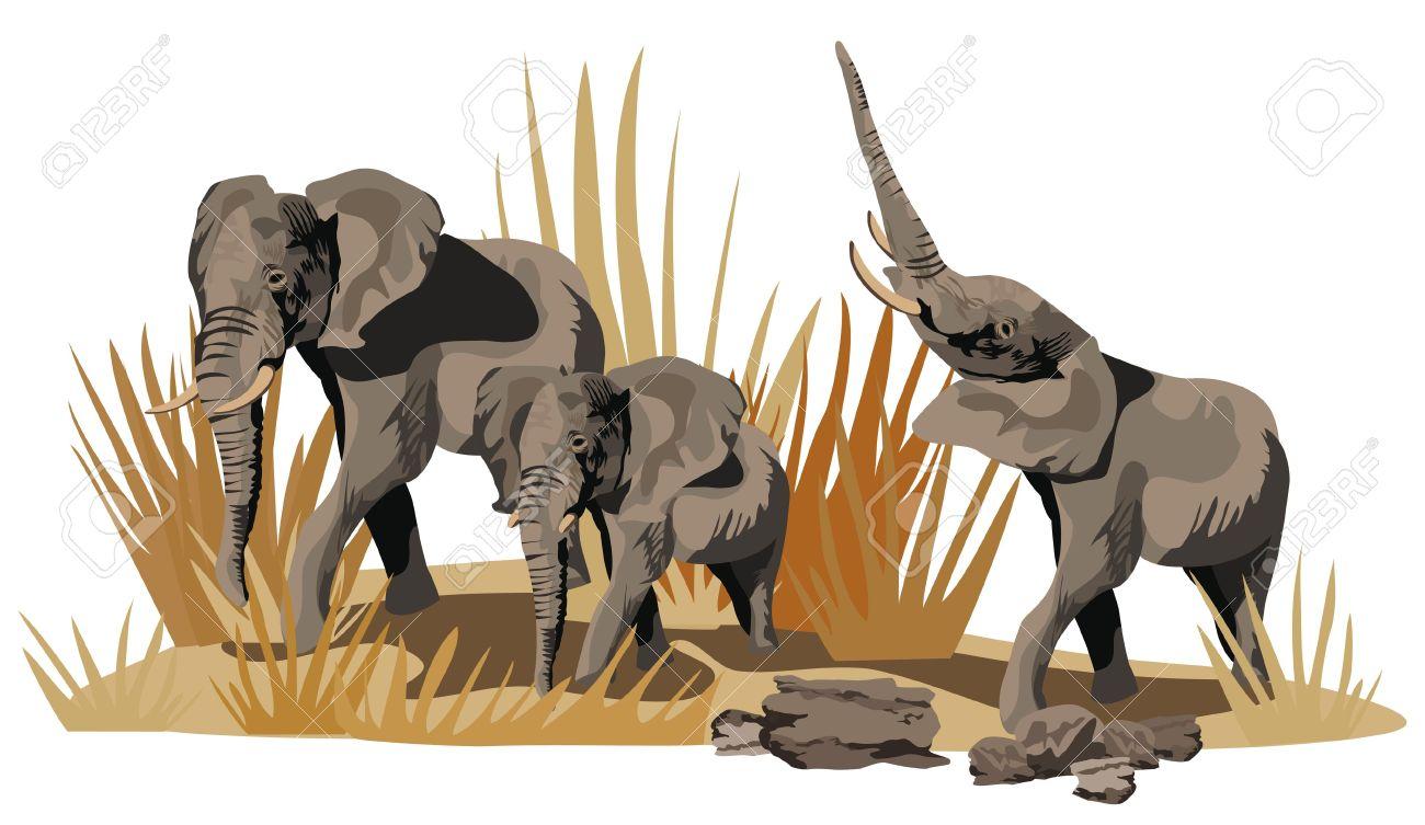 Illustration Of African Elephants On Savannah Isolated On White.