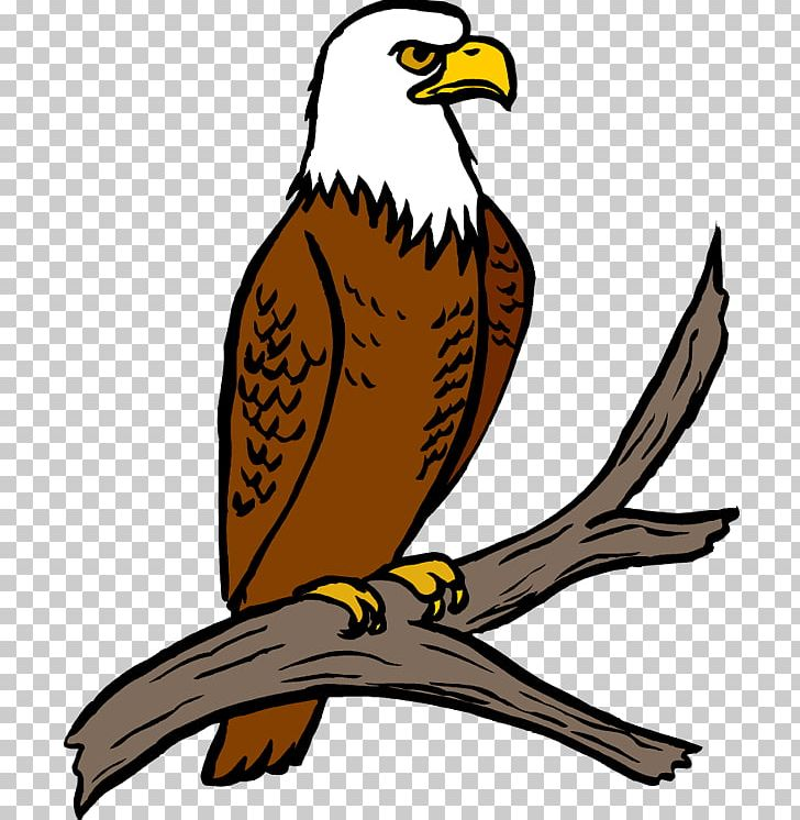 Bald Eagle Free Content PNG, Clipart, Accipitriformes.