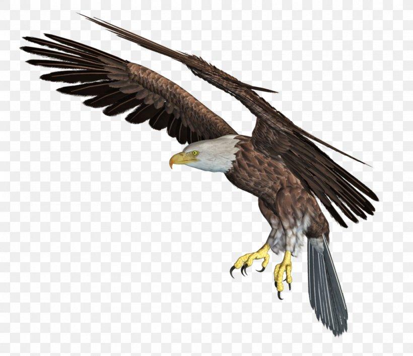Bald Eagle African Fish Eagle Clip Art, PNG, 1024x882px, 3d.