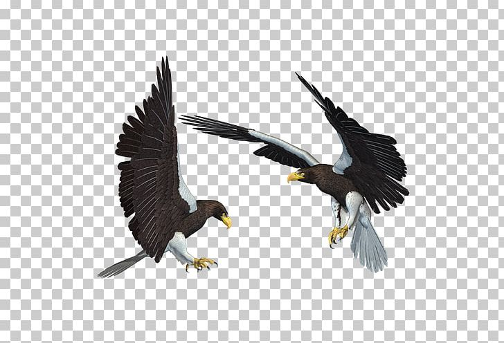 Bald Eagle African Fish Eagle PNG, Clipart, Accipitriformes.