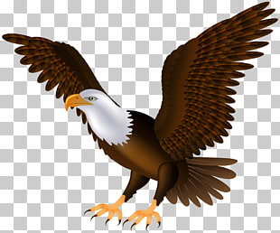 28 african Fish Eagle PNG cliparts for free download.