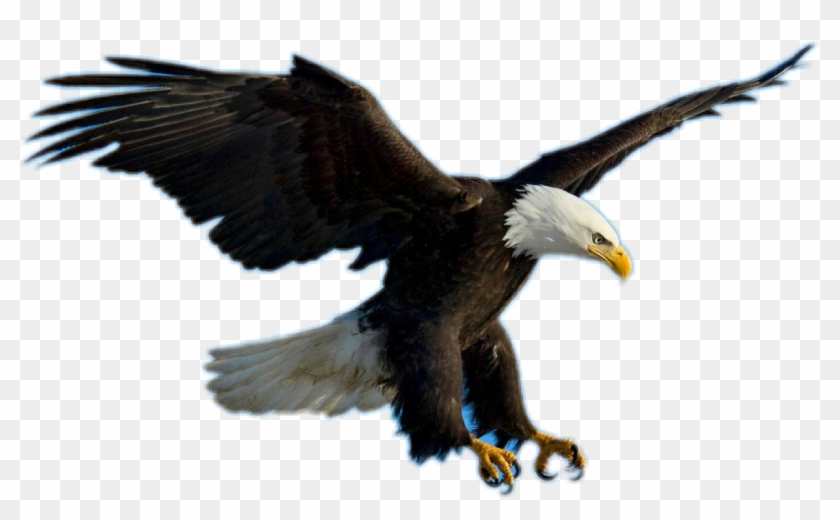 Bald Eagle Clipart Picsart.