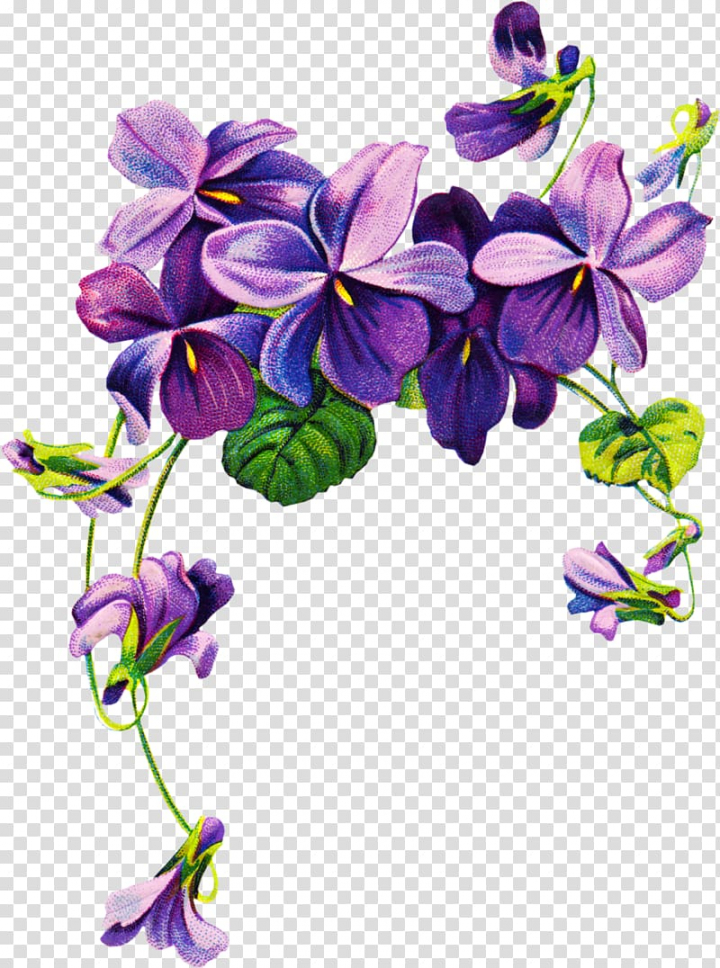 Sweet violet African violets Purple , purple watercolor.