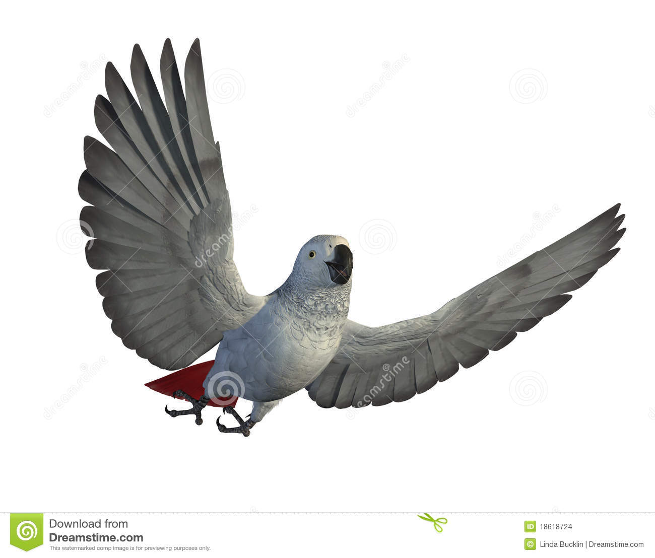 African Grey Parrot Flying Stock Images.