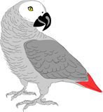 African grey parrot clipart.