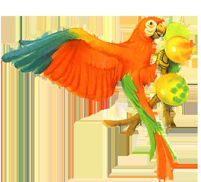 Rainforest Birds Clipart at GetDrawings.com.