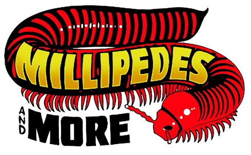 African millipede clipart 20 free Cliparts | Download images