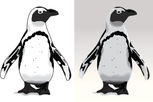 African penguin clipart.