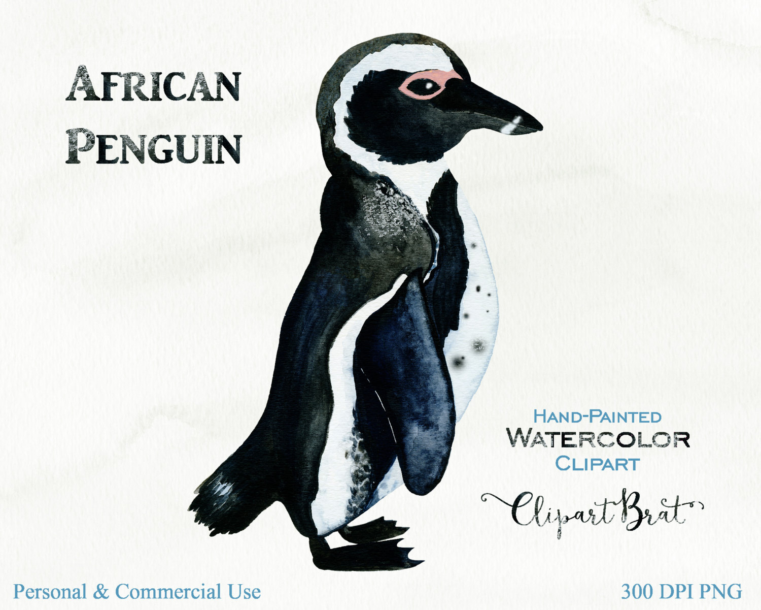 AFRICAN PENGUIN Clipart Commercial Use Clipart Watercolor Penguin.
