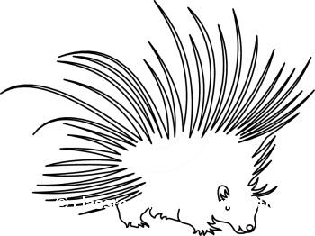 Porcupine Clip Art Black And White.
