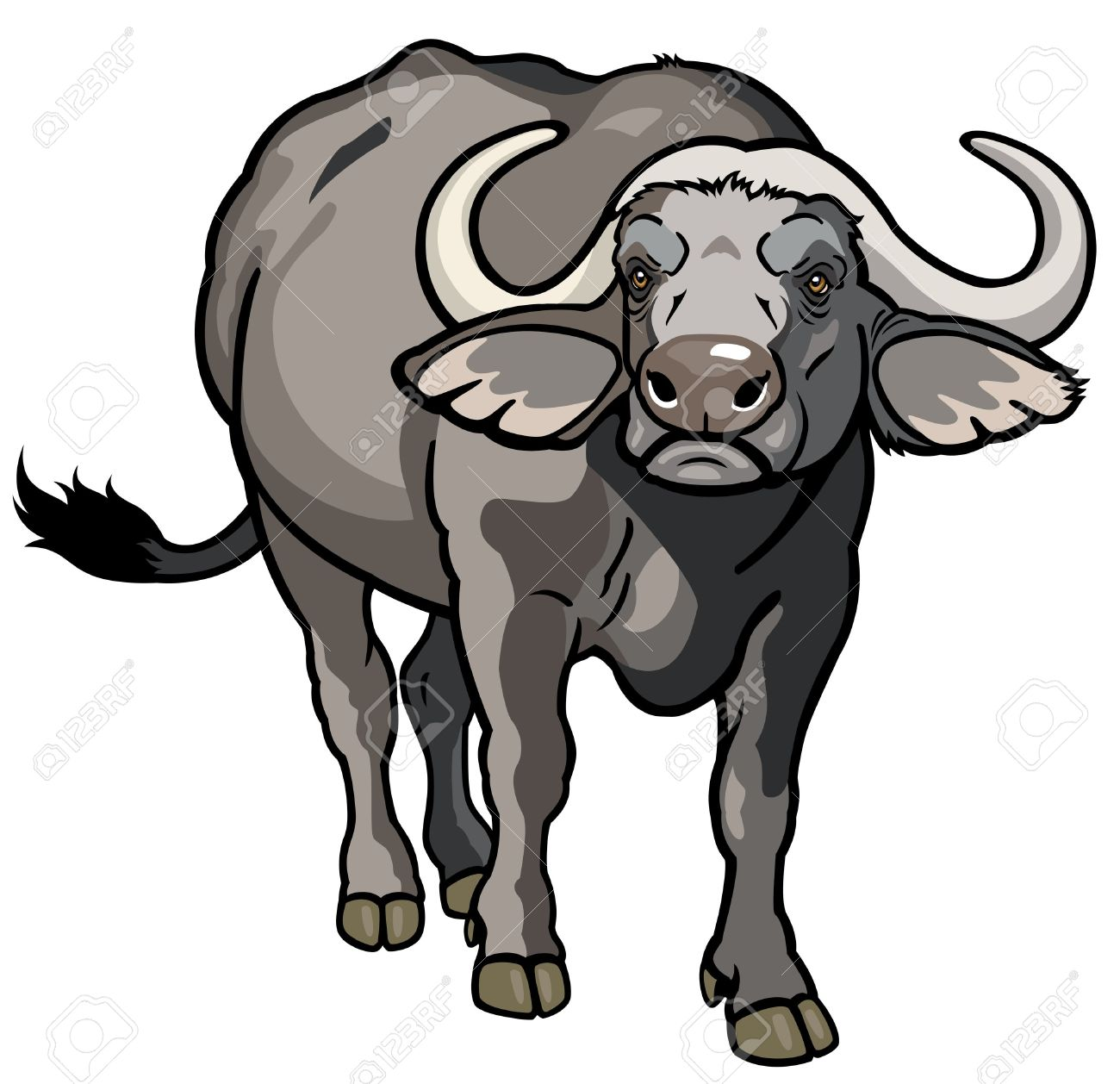 African Buffalo Clipart.