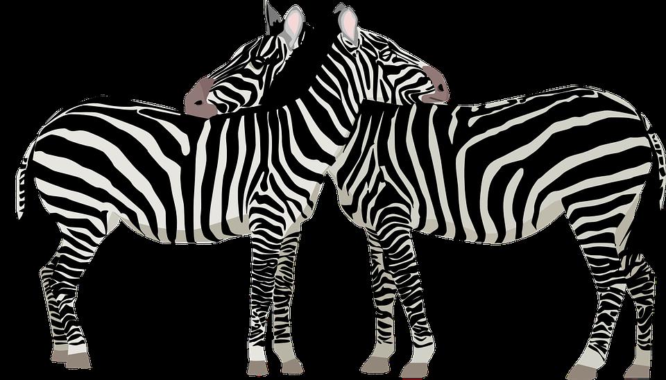 Zebras Africa Safari.