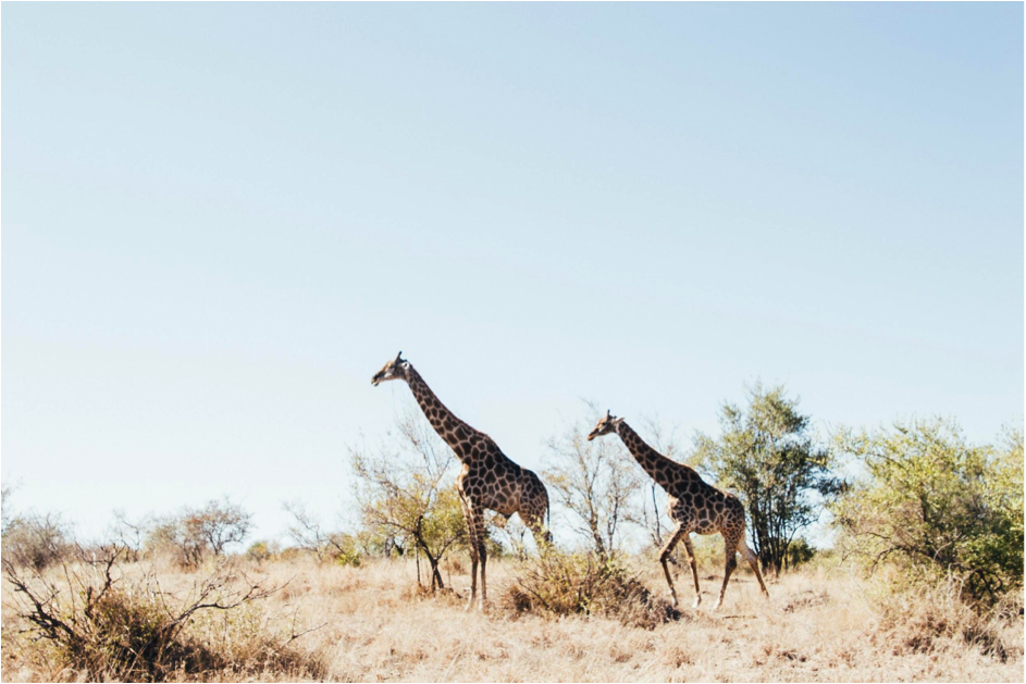 How to choose the right African Safari for you.