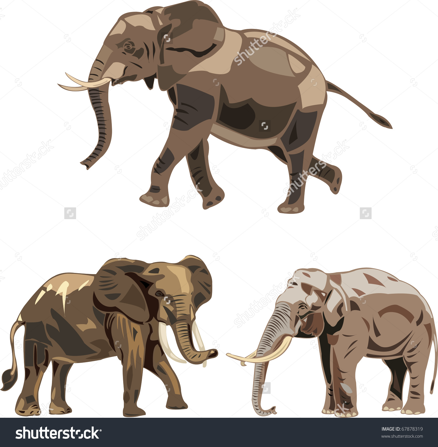 Worlds Three Kinds Elephants African Savannah Stock Vector.