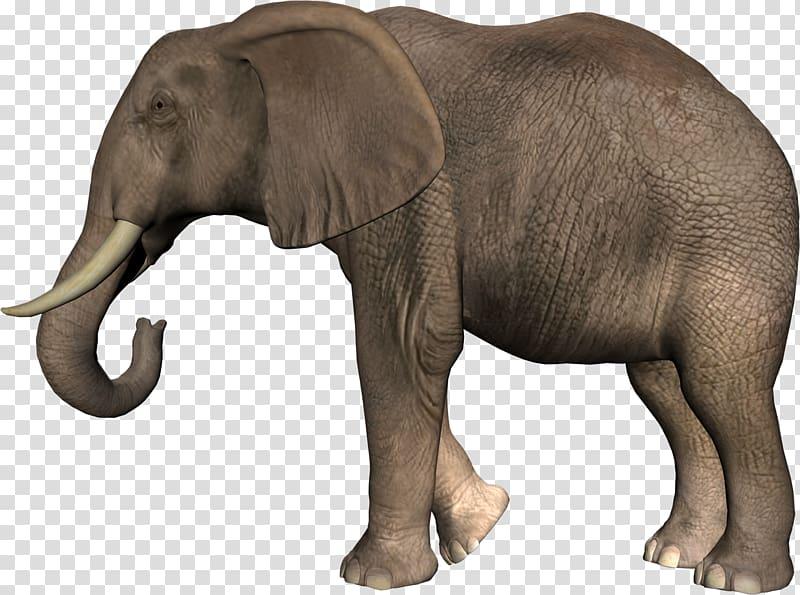 African bush elephant Asian elephant , Elephant transparent.