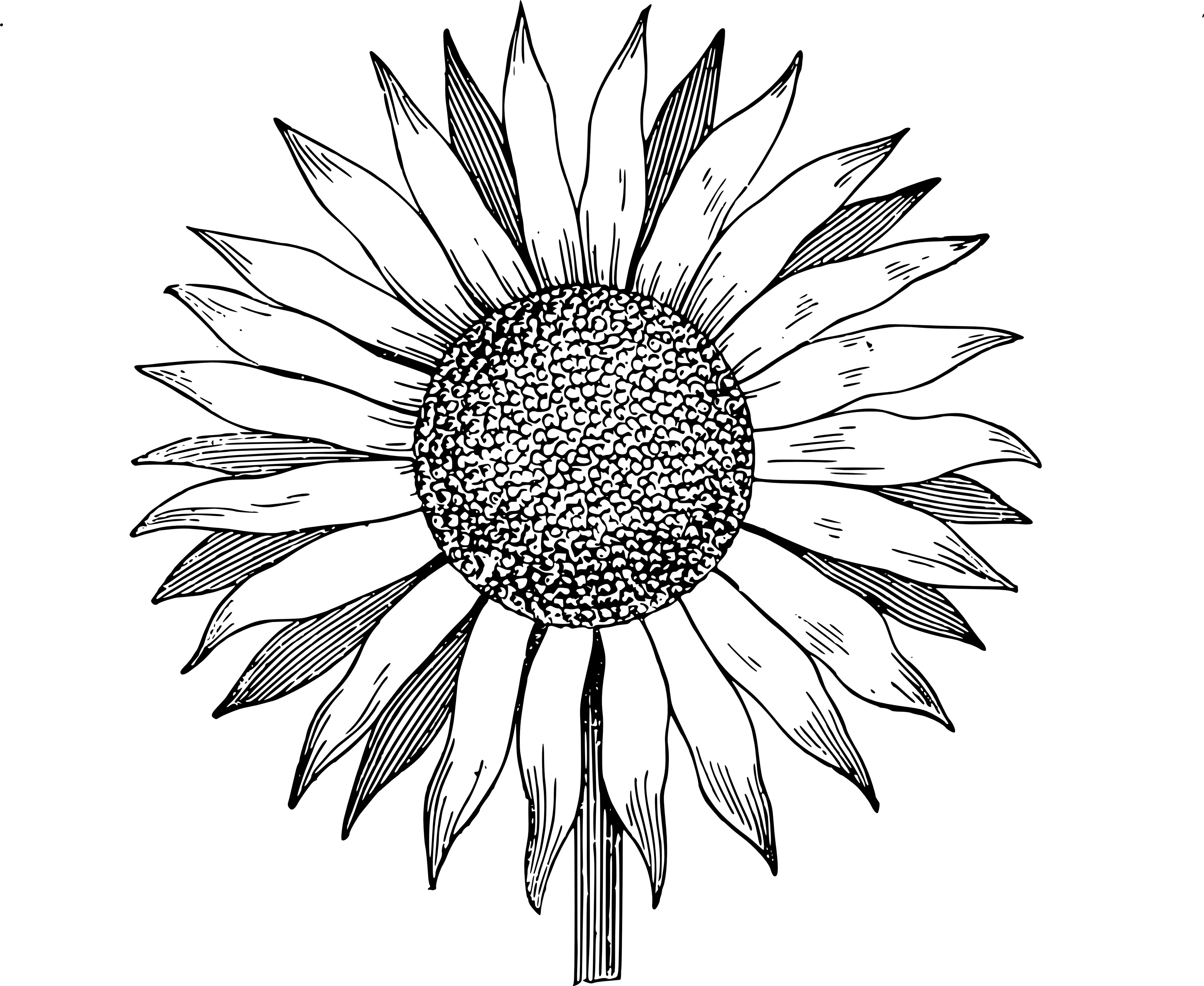 Free Sunflower Vector Black And White, Download Free Clip.