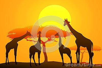 African Sunset On Safari Stock Photos.