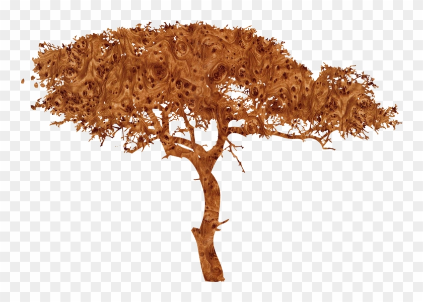 African Tree Silhouette Png, Transparent Png.