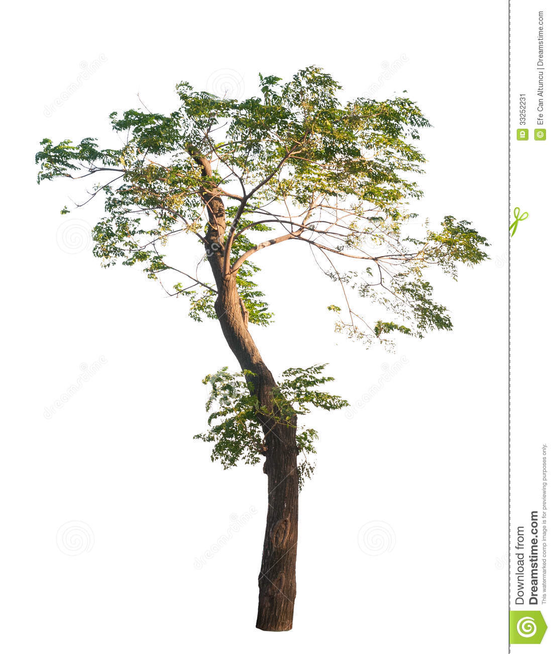 African Tree stock image. Image of leafy, decoration.