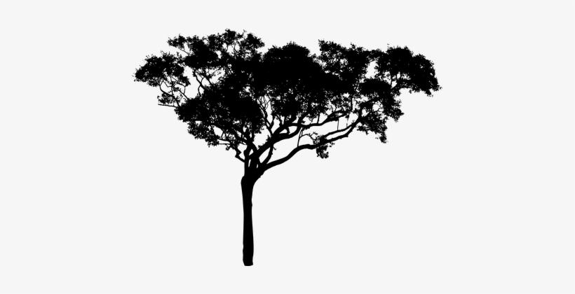 Tree Plant Vegetation Nature Silhouette Ec.