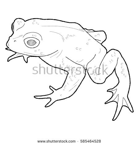 Toad Cartoon Stock Images, Royalty.