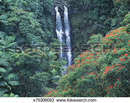 Stock Photo of USA, Hawaii, waterfall and African tulip trees in.