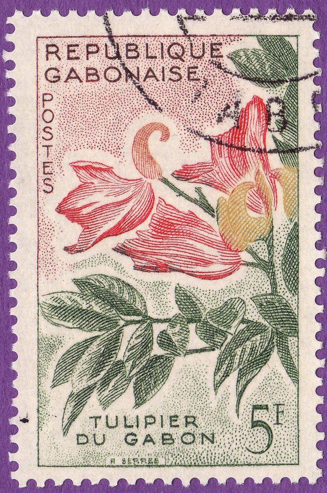 1000+ ideas about Tulpenbaum on Pinterest.
